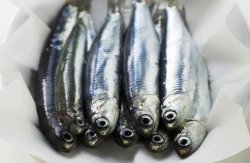 5 Food That Make you Smarter Anchovies